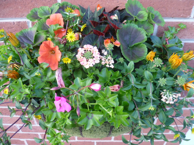 Seasonal Hanging Baskets