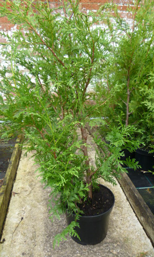 Hedging Plant