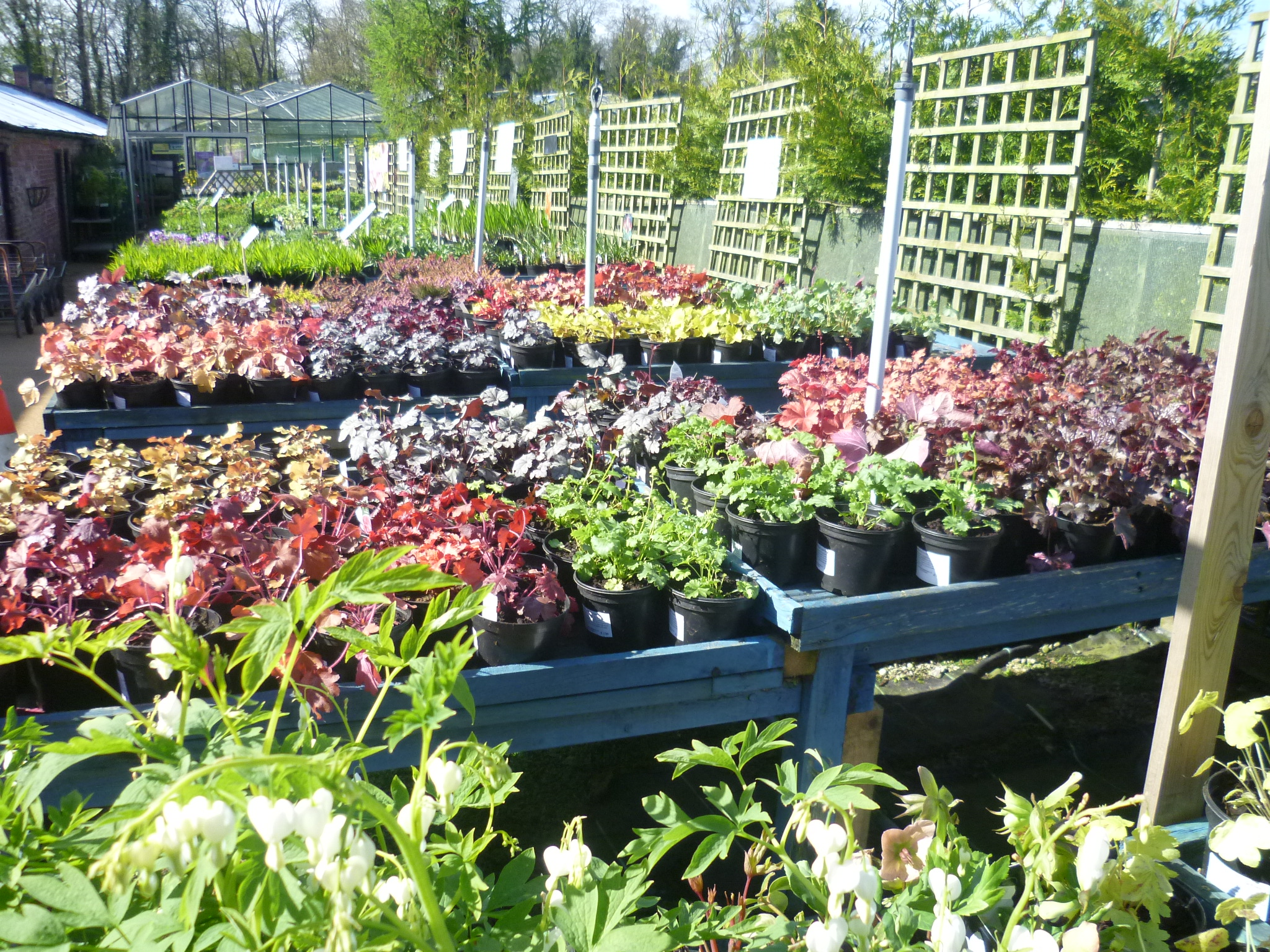 Our Derby Garden Centre Located In Castle Donington Has Easy Access From Nottinghamshire And Leicestershire We Are A Family Run Traditional Nursery