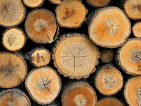 Logs and Fuels
